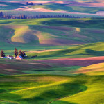 Palouse Dawn